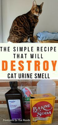 do male cats spray after being neutered